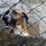 Forte chuva inunda abrigo de animais no Rio