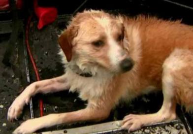 Animais desabrigados também recebem doações em Santos