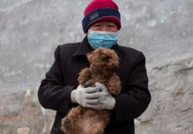 Oficiais da China oferecem recompensa a moradores que matarem cães para conter pandemia do coronavírus