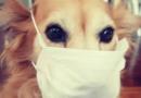 Como lidar com os animais de casa em tempo de coronavírus?