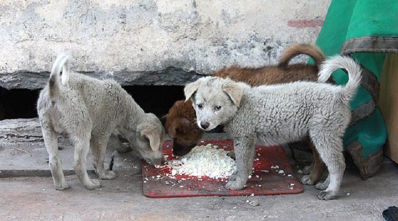 O efeito cascata da covid-19 nos animais que estão na rua