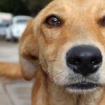 Cervejaria dá 3 meses de cerveja para quem adotar um cachorro durante a quarentena