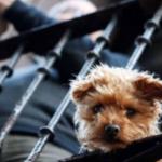 O importante papel dos animais de estimação durante a pandemia