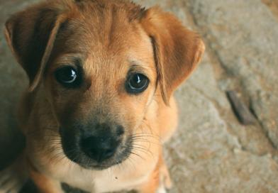 PB: Prefeito assina decreto que permite sacrifício de animais abandonados