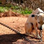 Projeto de lei que proíbe acorrentamento de animais é aprovado no Rio de Janeiro